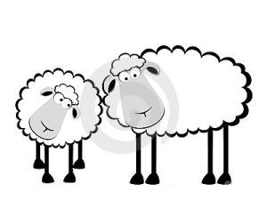 two-cartoon-smiling-sheep-15209702